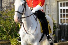 Mounted Royal Scots Dragoon Guard